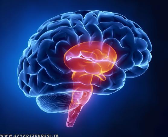 چگونه در عصر جدید، با مغز به جا مانده از 100 هزار سال پیش زندگی کنیم؟