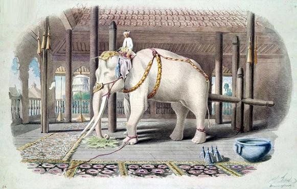 فیل های سفید زندگی تان را می شناسید؟!
